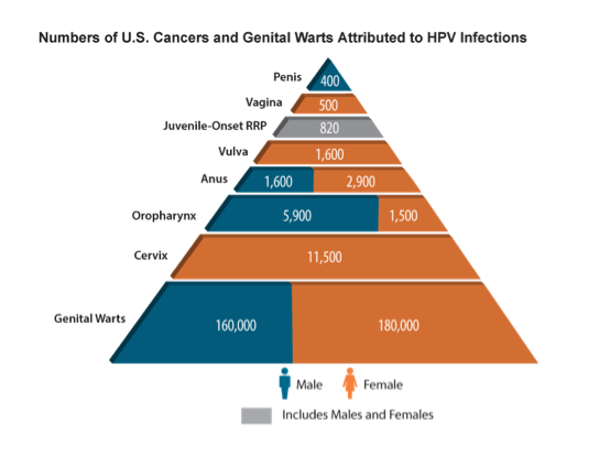 numbers-of-us-cancers-and-genital-warts-attributed-to-hpv-infections